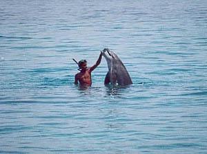 La delfina e il beduino